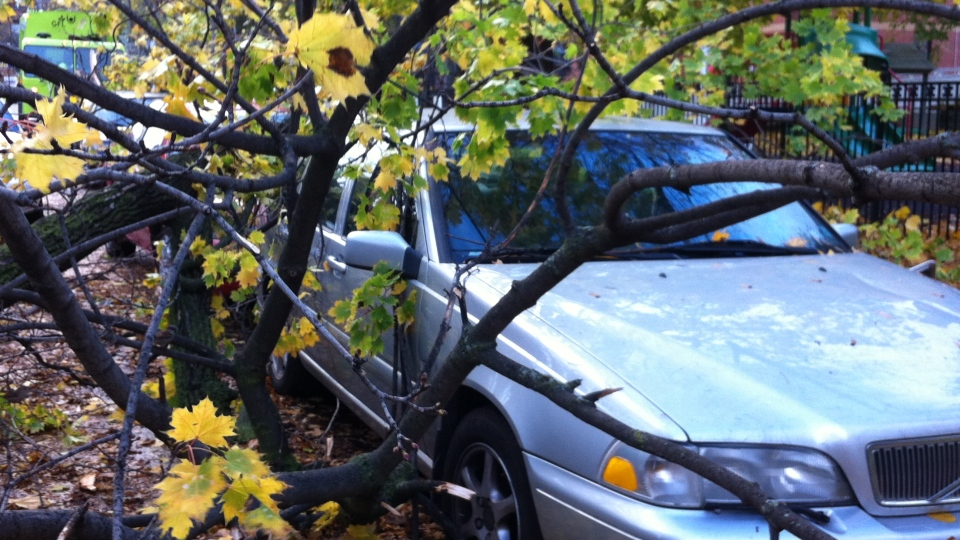 High winds downed a number of trees throughout the city on Tuesday, Oct. 30, 2012, causing damage to cars and houses. (Colin D'Mello / CTV Toronto)