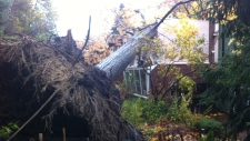 Tree topples onto home