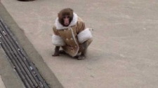 Judge to rule on Ikea monkey case