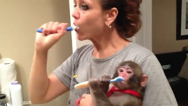 Darwin the monkey and owner Yasmin Nakhuda brush their teeth in this screen grab from a YouTube video.