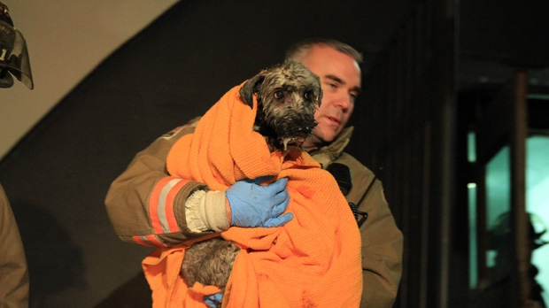 A Toronto firefighter carries a woman's pet dog after it was pulled from a burning apartment suite and revived early Wednesday, Jan. 16, 2013. (Tom Stefanac/CTV Toronto)