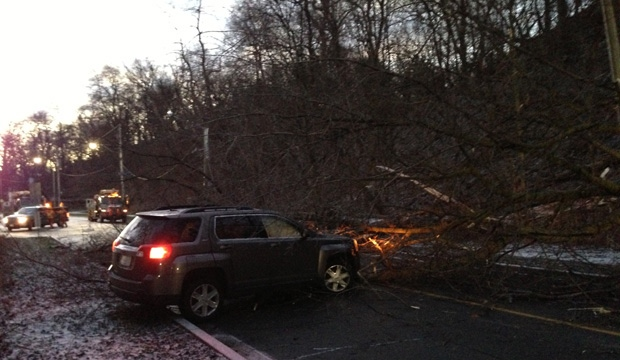 A downed tree is shown on Rosedale Valley Road early Sunday morning. Heavy winds knocked down trees and power lines overnight. (Kyle Surowicz/CP24.com)