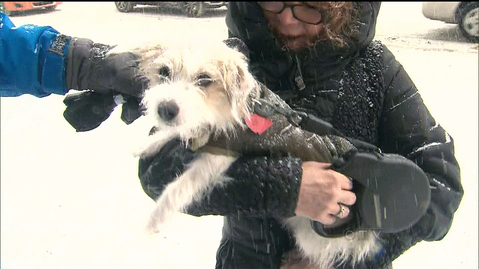 A dog owner speaks with CTV News about her dog's jacket in Toronto on Tuesday, Jan. 22, 2013.