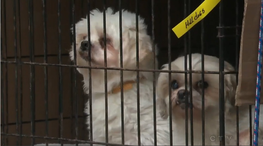 Two dogs arrive to the Toronto Humane Society from Quebec on Saturday, Feb. 2, 2012.