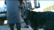 Dog rescued from icy waters of Lake Ontario
