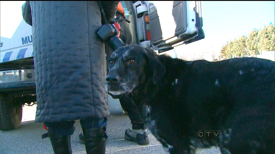Nicolle Lee stands with her dog Rocket after he was rescued by members of the Toronto Police Marine Unit on Wednesday, Feb 6, 2013.