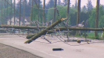 Downed hydro poles are seen in Alliston, Ont., on Tuesday, May 21, 2013.