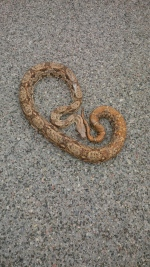 OPP say two exotic snakes were found abandoned in the Township of East Garafraxa on Tuesday, May 21, 2013. (Handout)