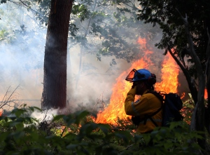 A Parks Canada crew member observes a section of Camelot Island, as part of a prescribed fire in Thousand Islands National Park in an effort to protect the rare, fire dependent pitch pine, Tuesday, July 22, 2014. (Fred Chartrand / THE CANADIAN PRESS)