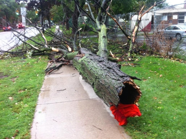 A Tuesday afternoon storm in Windsor, Ont. brought lots of lightning and downed trees on Aug. 26, 2014. (Jason Viau / CTV Windsor)