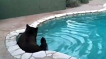 Backyard lounging: Bear goes for a dip in swimming