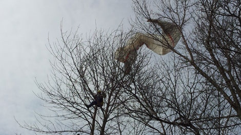 An errant glider found himself stuck in a tree on Tuesday, Mar. 6, 2012.
