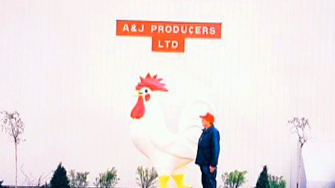 Someone has plucked a giant fiberglass rooster from a farmer's yard in southern Ontario.