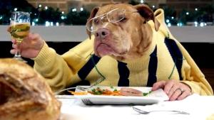 Doggone dinner: 13 dogs, 1 cat