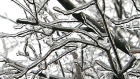 CTV Toronto: One year since ice storm cut power