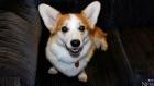 Dog inside truck stolen from Brampton parking lot