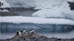 Gentoo penguins stand on rocks near the Chilean station Bernardo O'Higgins, Antarctica. (AP / Natacha Pisarenko)