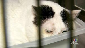 Stray cat strut: 34,000 stray felines roaming Surr