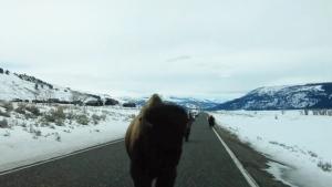 Canada AM: Bison creates head-on collision