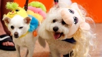 Mazzy, dressed as a caterpillar, and Lemon, dressed as Miss Piggy, at a Dallas-area PetSmart store on Oct. 25, 2014. (Richard W. Rodriguez / Invision for PetSmart)