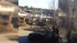 Barrie police swarm house