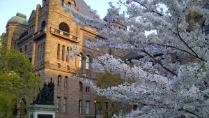 Cherry blossoms are seen outside of Queen's Park in Toronto on Monday, May 4, 2015. (George Stamou / CTV Toronto)