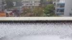 Freak hailstorm pounds Vancouver streets