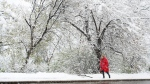 A woman walks through a snowy Edmonton, on Wednesday, May 6, 2015. (THE CANADIAN PRESS/Nathan Denette)