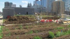 Rooftops in Toronto transformed into secret garden