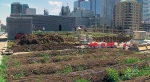 Above the congested roads, busy sidewalks and grey concrete, a sky-high urban farm is slowly taking root in the heart of downtown Toronto.