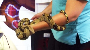 CTV Calgary: Settling in with a snake