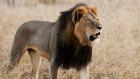 CTV National News: Outrage against U.S. hunter
