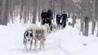 Lifetime: Helps kids with dog sledding