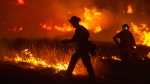 A firefighter lights a backfire as the Rocky Fire burns near Clearlake, Calif., on Aug. 3, 2015. (AP / Josh Edelson)