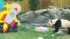 Extended: Giant panda marks 7th birthday with cake