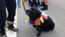 Canine Pride