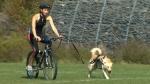CTV Atlantic: Endurance sports with your dog
