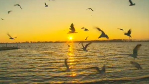 Take a break from the hustle and bustle of the big city to step back and admire its beauty. CTV News photojournalist George Stamou turns his lens on Toronto to capture daily life across our city.<br><br> Birds fly at sunrise as seen at Toronto&#39;s Cherry Beach on Wednesday, Nov. 4, 2015. (George Stamou / CTV Toronto)