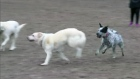 CTV Toronto: Dog bite debate at City Hall