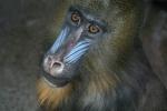 A baboon at the Toronto Zoo (Facebook/The Toronto Zoo)