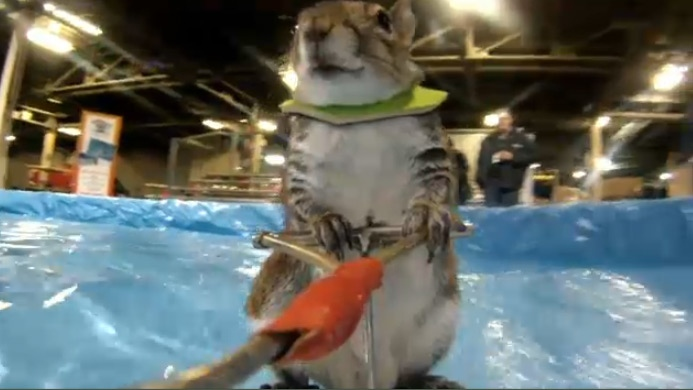 Waterskiing squirrel teaching safety at boat show ctv for Pool show toronto