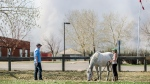 With smoke from wildfires several kilometres away, Sarah Naugle walks her horse Lady on the grounds of Greely Road School in the Gregoire subdivision near the southern boundary of Fort McMurray, Alta., on Monday, May 2, 2016. (Greg Halinda / THE CANADIAN PRESS)