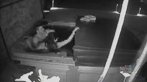Trespassers has sex in hot tub, RCMP investigating