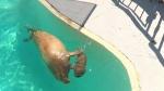 CTV National News: History-making walrus pups