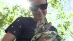 City of Edmonton cat video