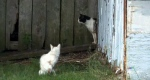 Cats in the backyard of Lisa Donovan's property in North Sydney, N.S.