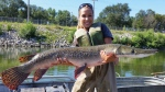 This Aug. 12, 2015 photo provided by the Illinois Department of Natural Resources shows IDNR biologist Nerissa McClelland holding alligator gar collected during a sampling survey at Powerton Lake in Powerton, Ill. (Illinois Department of Natural Resources via AP)