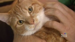 A one-year-old tabby is recovering after his owner
