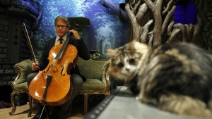 """David Teie, a U.S. composer and cellist, prepares to play his cello during a interview to promote his new album """"Music for Cats"""". (AFP PHOTO/ADRIAN DENNIS)"""