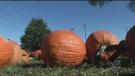 fall weather, pumpkins